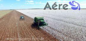 Brasil deve ter 35% mais soja e trigo, 24% mais milho e 43% mais algodão em dez anos