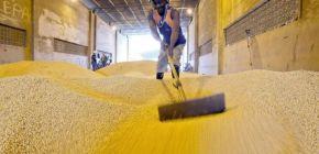 Produtor vive dilema entre vender a soja no preço baixo ou armazenar