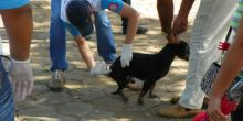 Campo Novo do Parecis lança campanha de vacinação antirrábica gratuita