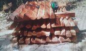 Indígenas e madeireiros são alvos de operação contra desmatamento em Comodoro