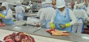 Fechamento temporário de frigoríficos em MT reduz abates pela metade