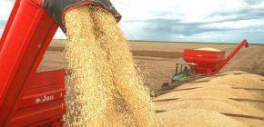 Plantio de soja no Brasil atinge 17,3% da área e está adiantado, diz Safras
