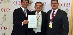 MT é reconhecido oficialmente pela OIE como livre de peste suína