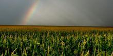 Governador participa do lançamento da colheita de safra recorde em MT